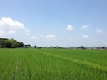 2013.06.29杉戸町.JPG