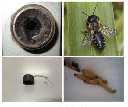 高圧ガス容器メス継手内へのハチの巣作りに注意