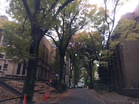 2015.11.19東大本郷.JPG