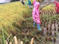 2016.09.23稲刈り祭り2.JPG