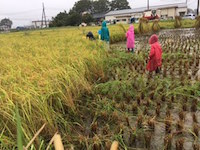 2016.09.23稲刈り祭り3.JPG